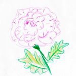 Quick Rose